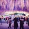 Парк неймовірної краси Каваті Фудзі в Японії