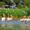 Дунайський біосферний заповідник – місце, яке мусить побачити кожен