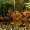 Краснокутський дендропарк: подарунок нащадкам