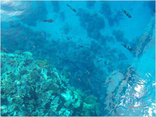 Кораловий ріф в Хургаді