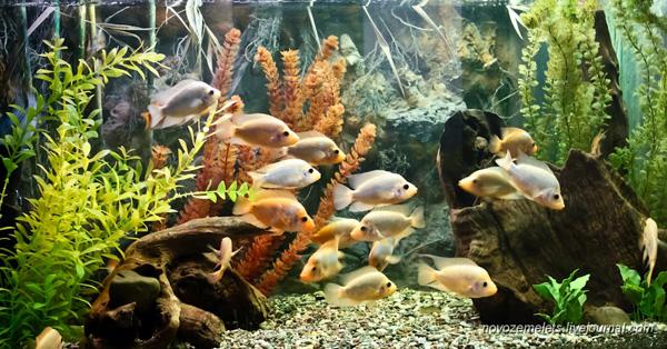 Зоологічний музей