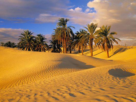 Озіс в пустелі Тунісу