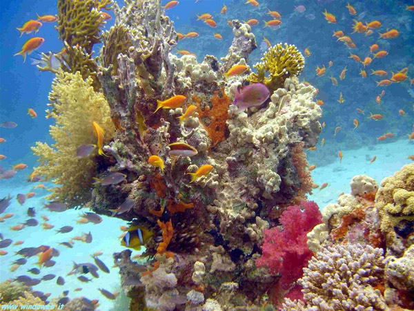 Шарм-Ель-Шейх. Кораловий риф