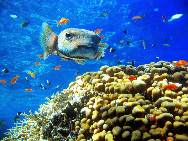Шарм-Ель-Шейх. Підводний світ