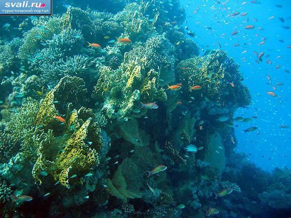 Кораловий риф біля Макаді Бей