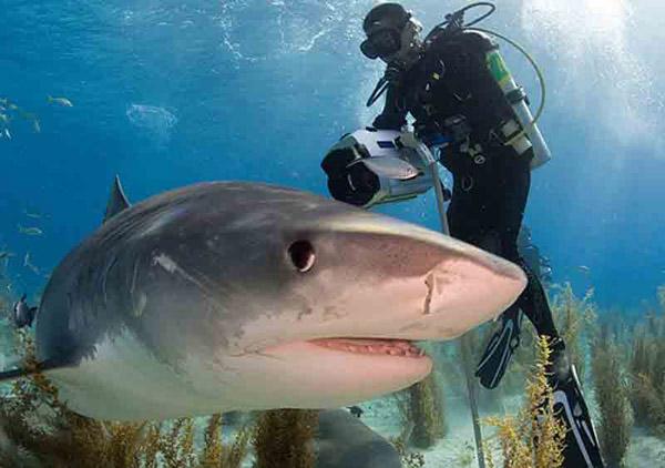 Плавання з акулами
