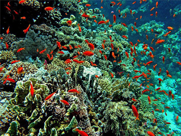 Море в Єгипті