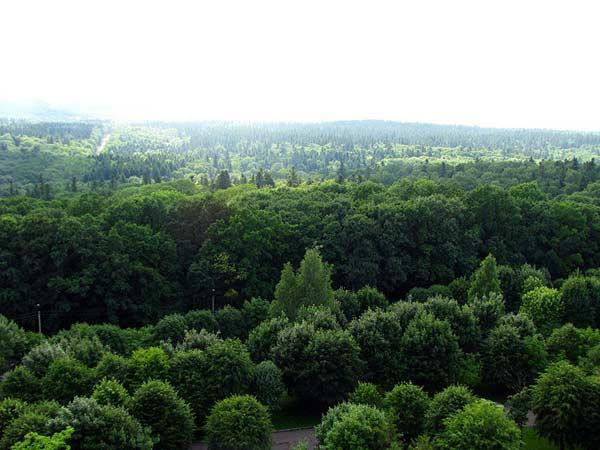 Ліси в Трускавці