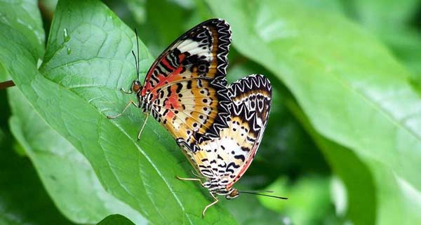 Сад метеликів