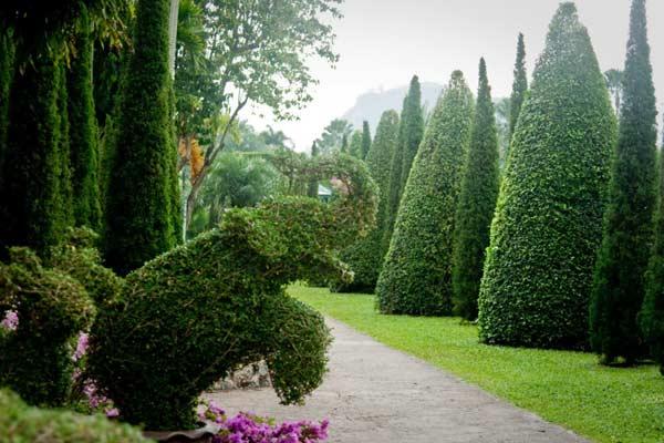 Сад гаїв