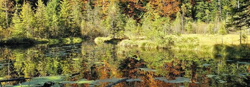 Журавлине озеро на Львівщині (Мертве озеро)