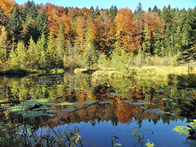 Озеро Журавлине восени