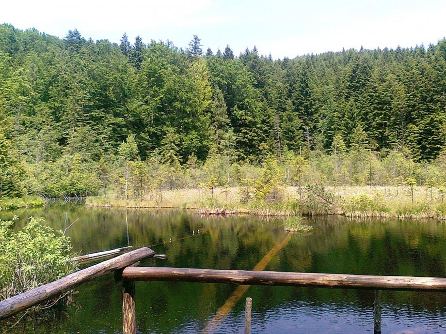 Озеро Журавлине влітку