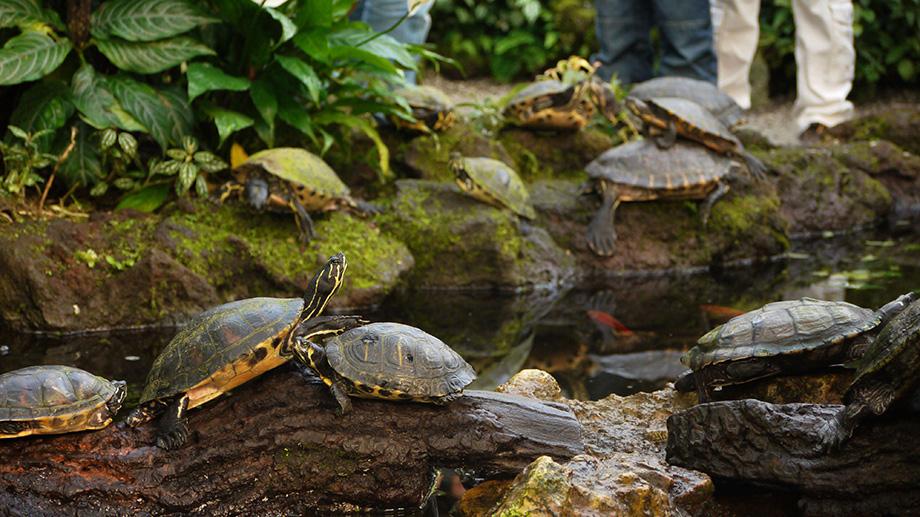 Черепахи в Мюнхенському ботанічному саду