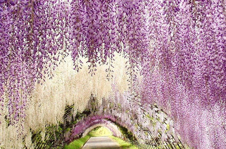 Парк гліценій в Японії