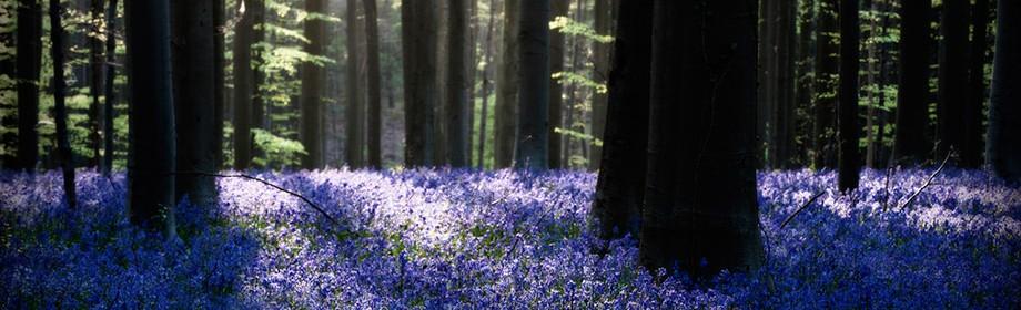 Містичний ліс в Бельгії
