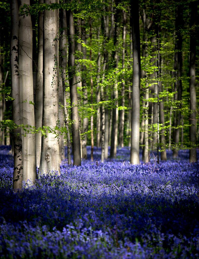 Красивий ліс з квітами