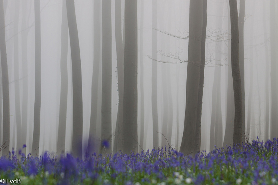 Халербос в тумані