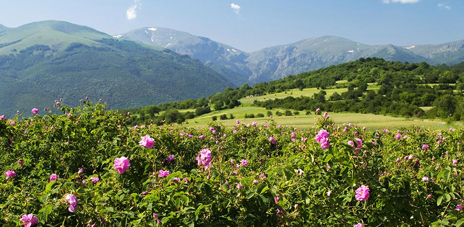 Долина Троянд в Болгарії