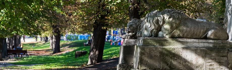 10 львівських левів, які варті вашої уваги