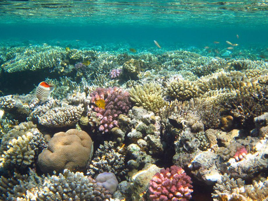 Підводний світ Єгипту