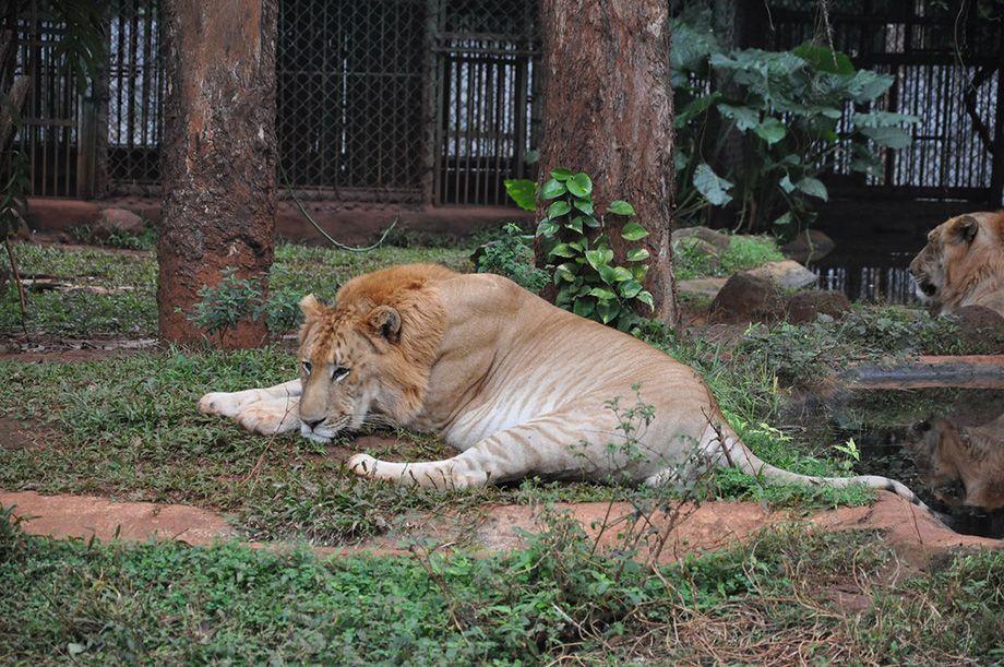 Зоопарк Дуншаньху