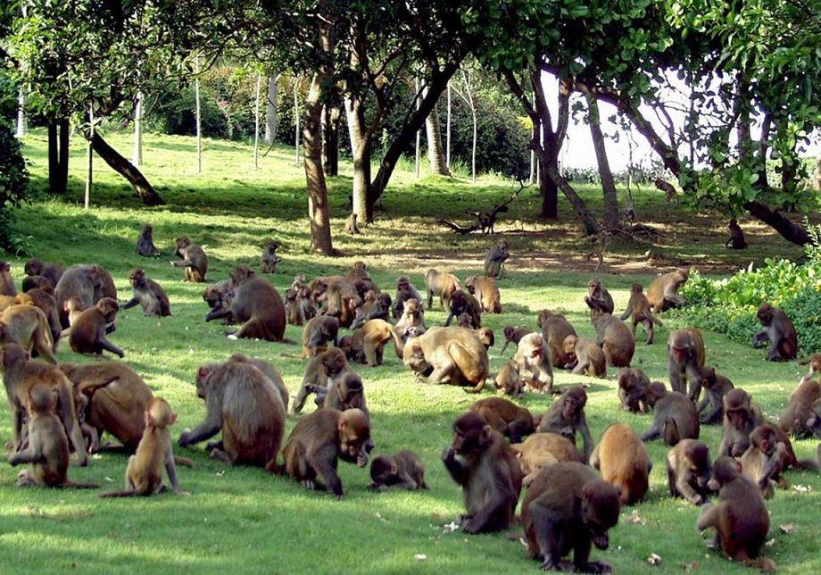 Острів мавп