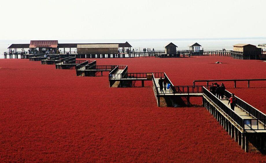 Червоний пляж Паньцзінь північно-східний Китай