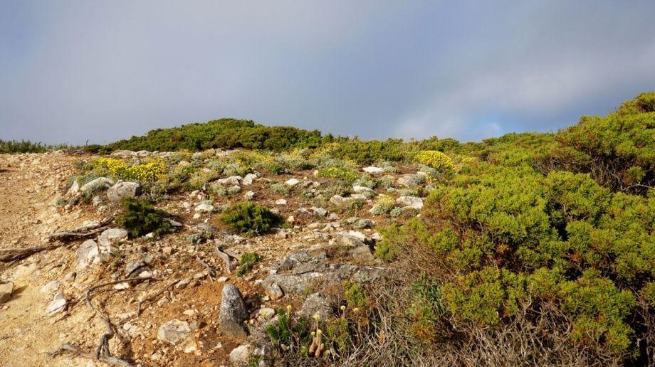 Pishokhidny-route-to-Cado-da-Roca-vegetation