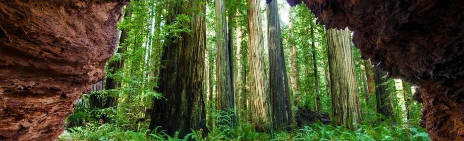Національний парк Секвойя в Каліфорнії
